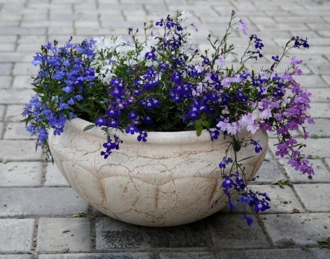 Дотоинства и недостатки цветочных горшков из шамотной глины
