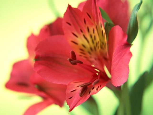 Выращивание цветов как вид бизнеса