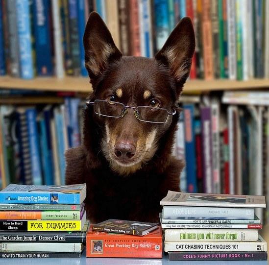 Where am a librarian