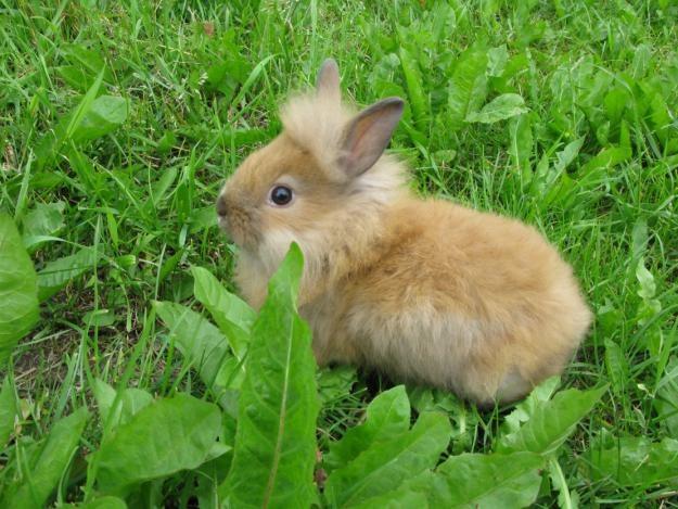 Как содержать кроликов на даче