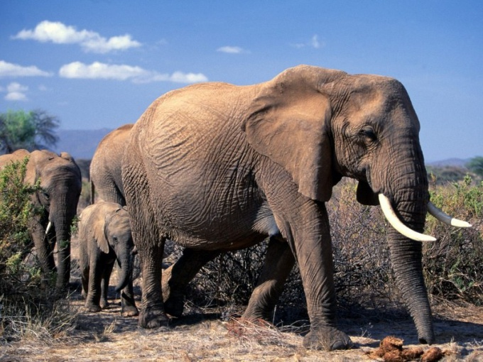 Какие признаки характерны для млекопитающих