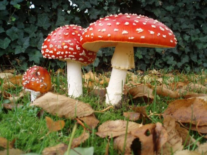 Какие признаки растений есть у грибов