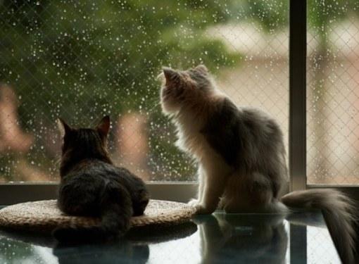 Как кошка реагирует на смену погоды