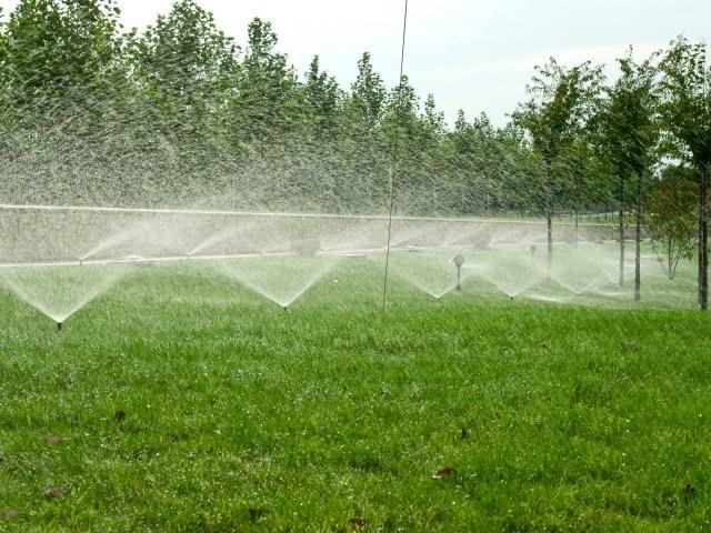 Дождевание газона