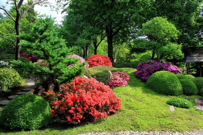Что такое газон и чем он отличается от клумбы