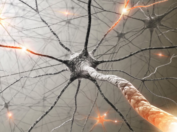 Что такое вегетативная нервная система