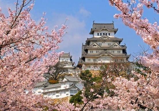 Почему сакура - символ Японии