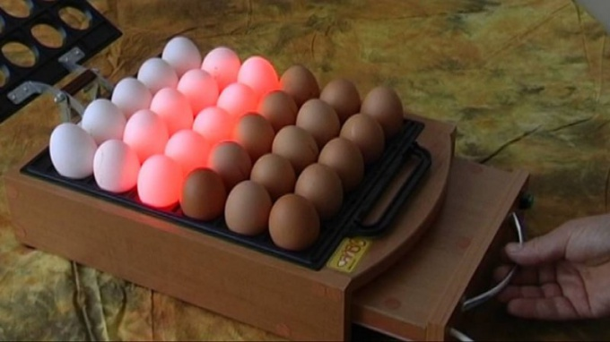 Check the eggs by candling before placing in the incubator