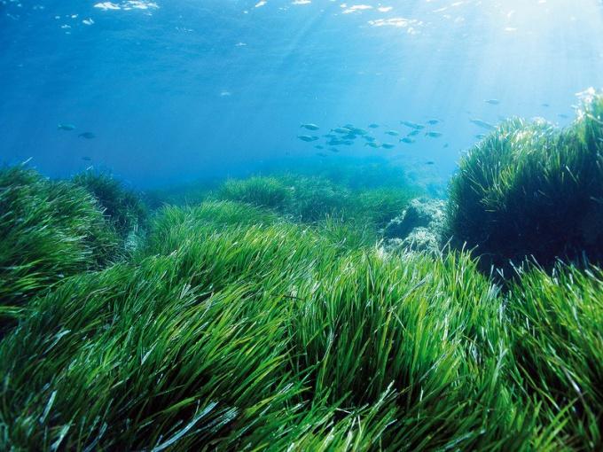 Какие бывают водоросли
