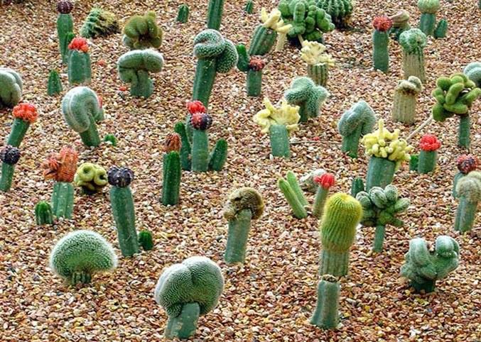 Все о кактусах: требования к почве