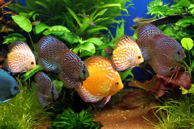 Все о рыбках: каких рыб можно содержать вместе