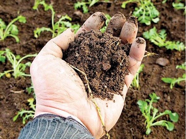 В любом грунте больше всего твердых частиц: песка, глины, минералов