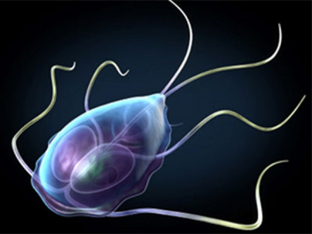 How to look Giardia in the stool