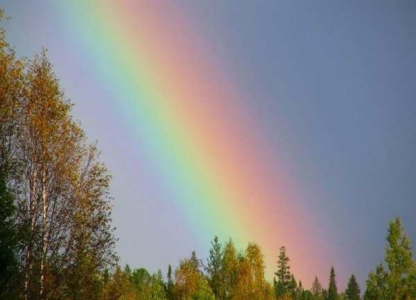 All about the rainbow as a physical phenomenon