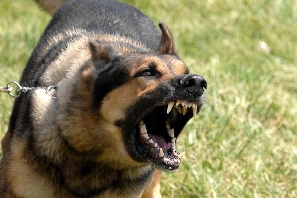 Сны с кусающими собаками - негативные!