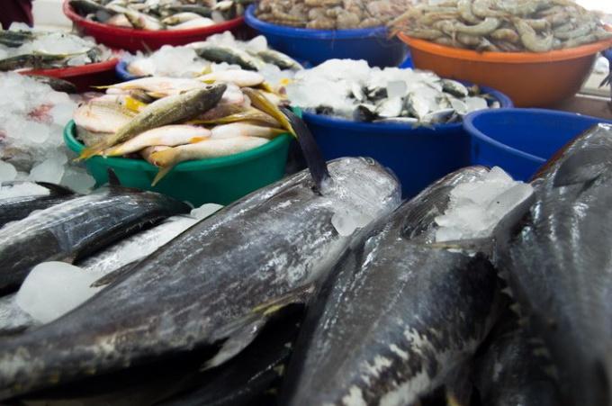 Какая рыба вредна для беременных 24