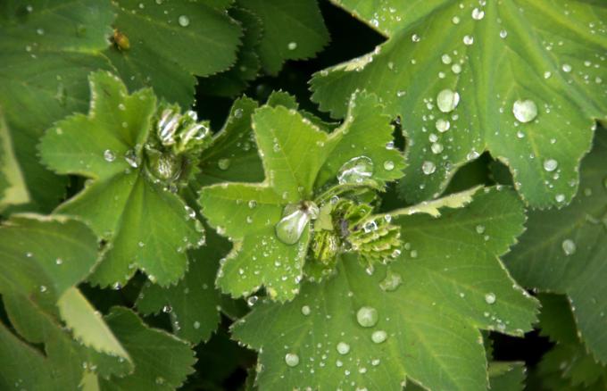 Как происходит обмен веществ у растений