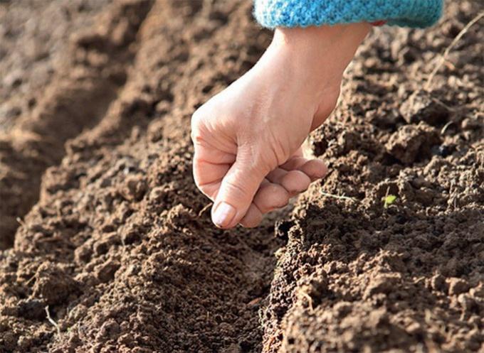 Посадка семян для открытого грунта