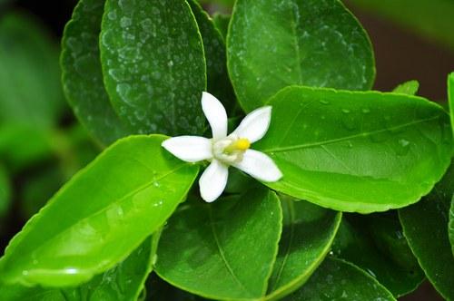 Как осуществляется транспорт веществ у покрытосеменных растений
