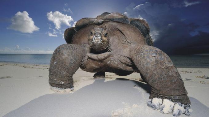 Черепахи - одни из долгожителей животного мира!