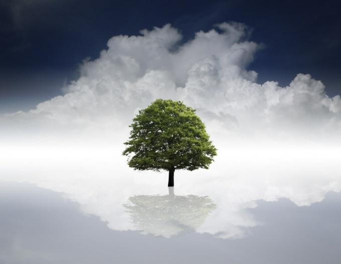 Какие деревья дают энергию, а какие забирают