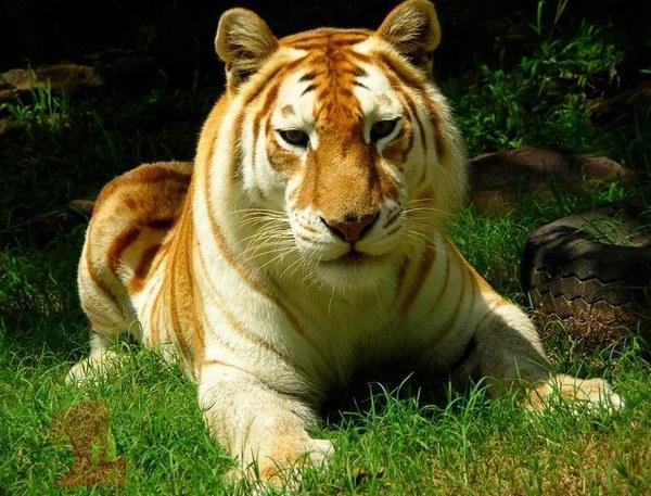 Какие животные самые редкие