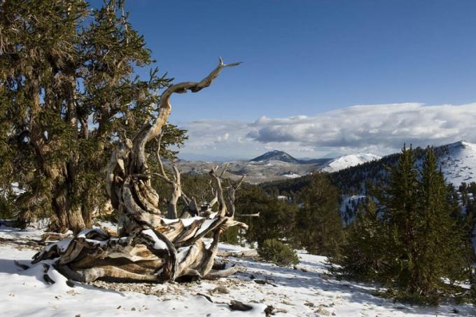 Белые горы, Калифорния