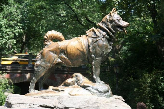 Памятник Балто - псу, спасшему жителей Аляски от дифтерии