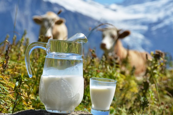What is the fat natural cow's milk