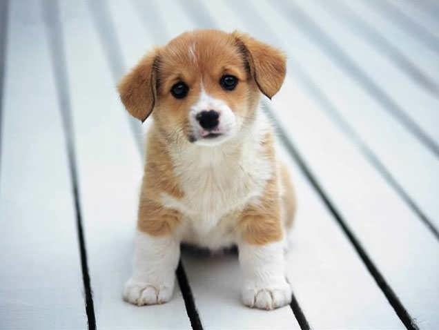 Какова продолжительность жизни домашней собаки