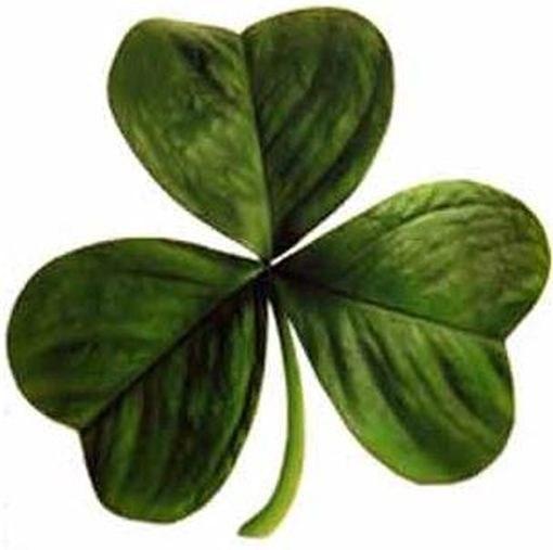 Трилистник, эмблема Ирландии
