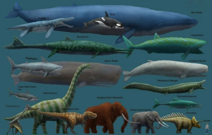 Сравнительная характеристика самых крупных животных мира