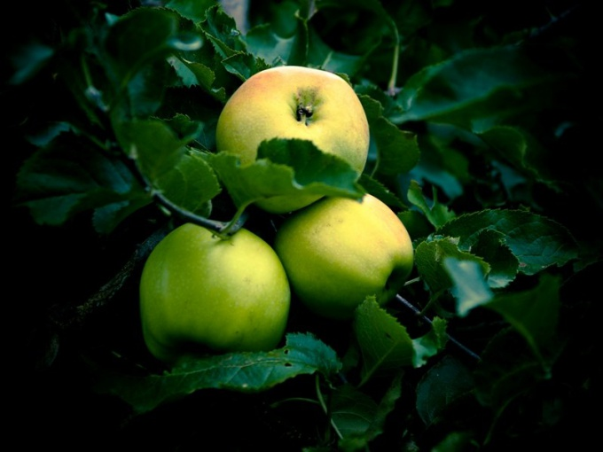Блюда из яблок не только вкусные, но и полезные