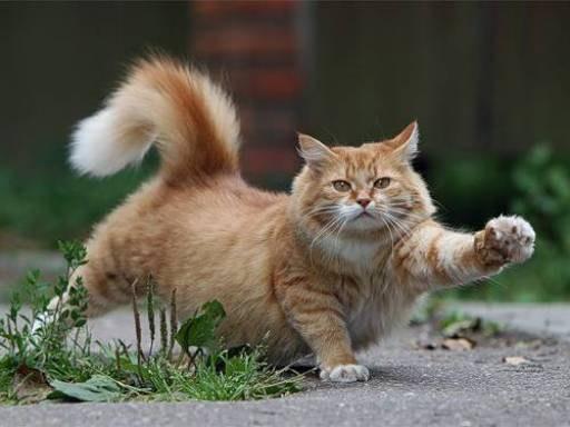 отучить кота метить территорию