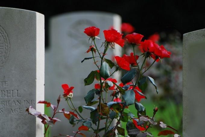 Цветы на могилу