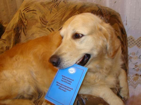 What vaccinations should do the dog annually