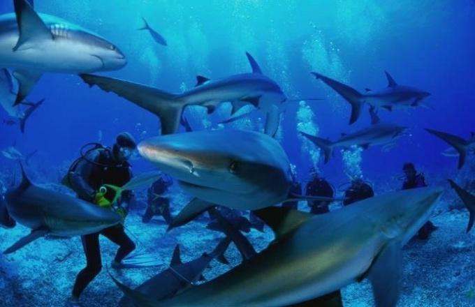 Есть ли акулы в Средиземном море