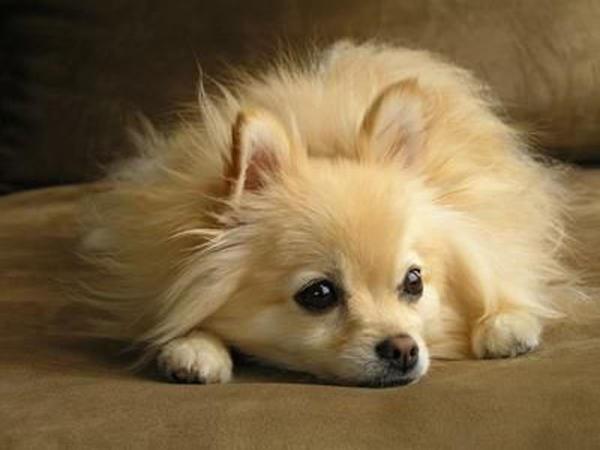 признаки лишая у собак