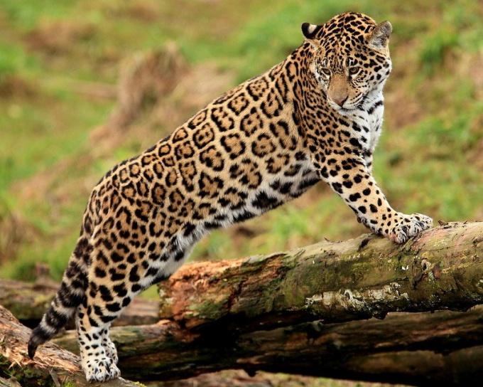 Животные и растения тропических лесов