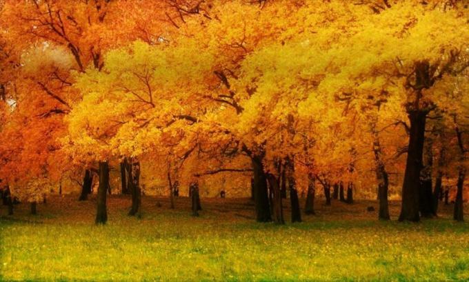 Осенний лес в Самаре