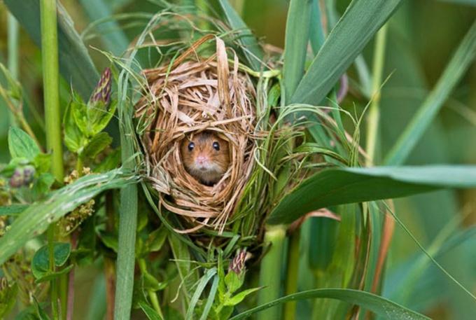 Гнезда устраивают не только птицы, но и другие животные!