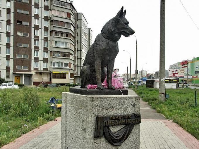 Верный пес в Тольятти