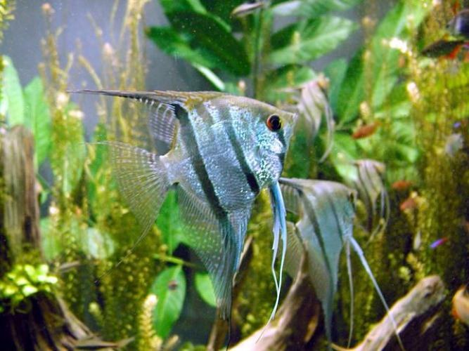 Какой аквариум приобрести: пресный или морской