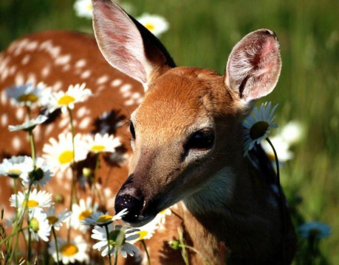Значение животных в природе трудно переоценить!