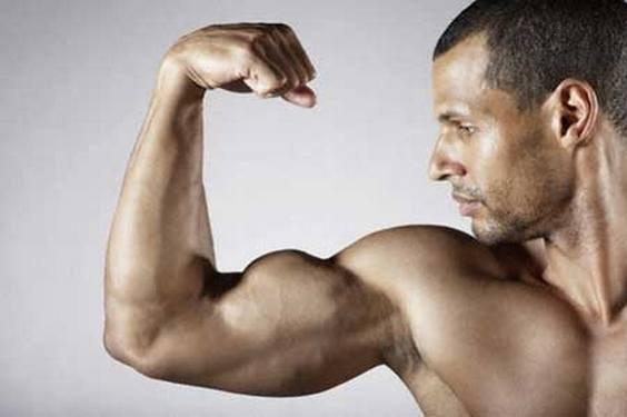 Самые сильные мышцы в теле человека