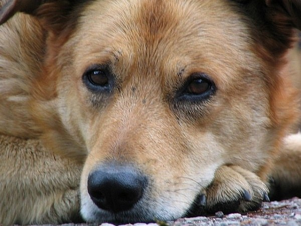What are the necessary preparations for colds for dogs