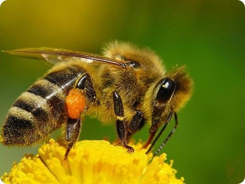 Зачем нужны насекомые