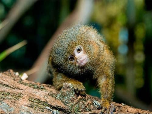 Какие животные обитают в Южной Америке