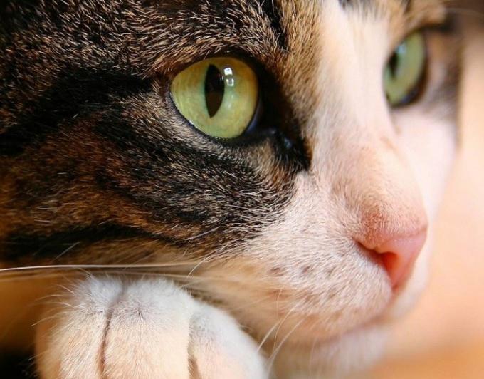 Какое красивое имя дать кошке