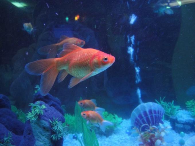 How to set a compressor for aquarium